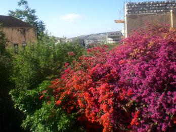 Vita nostra settembre 2011 speciale terrasanta for Giardini meravigliosi